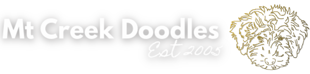 Australian Labradoodle Breeder