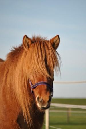 Zorgboederij Zorg en Paard