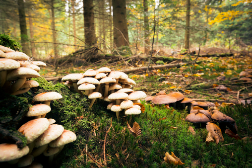 What fungal networks can teach us about learning in a hybrid world