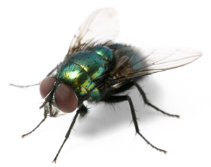 plaga de moscas