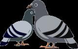 plagas de aves