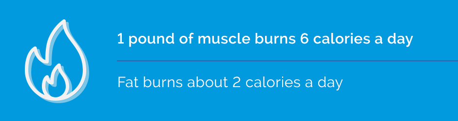 1 pound of muscle burns 6 calories