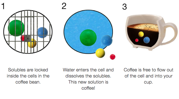 Three steps of coffee extraction. 1. Solubles are locked inside the bean. 2. Water releases the compounds 3. The compounds flow into your cup