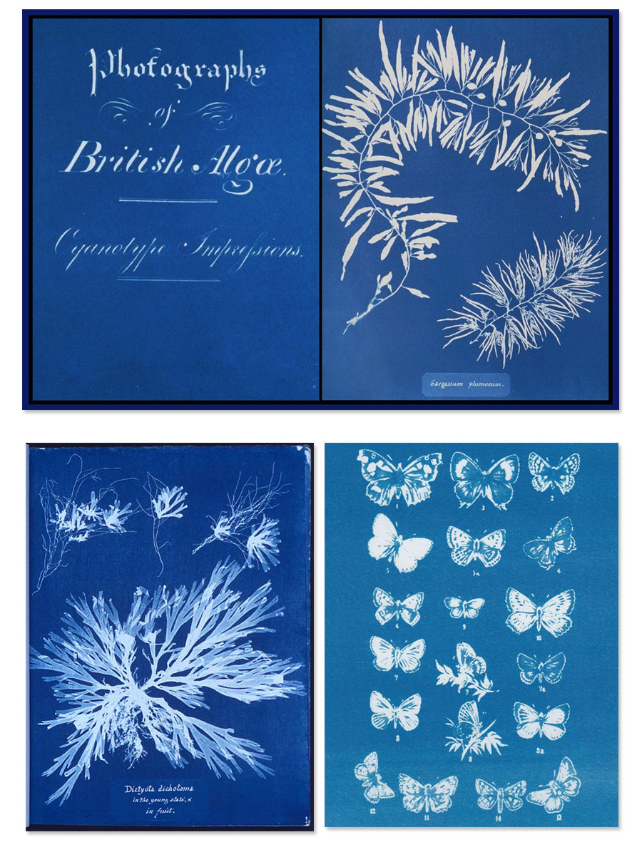 Mavi Baskı Anna Atkins