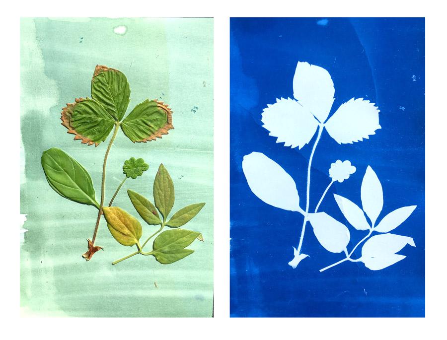 Çocuklarla Bitkilerden Harika Eserler