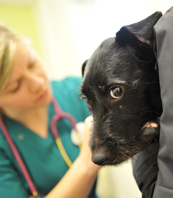 Abbey Vets. Nurse with dog