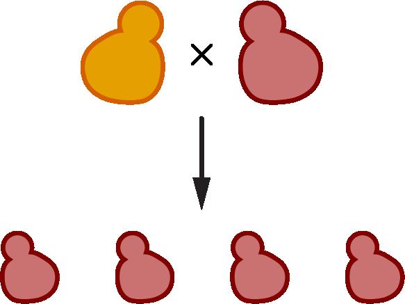 Yeast gene drive