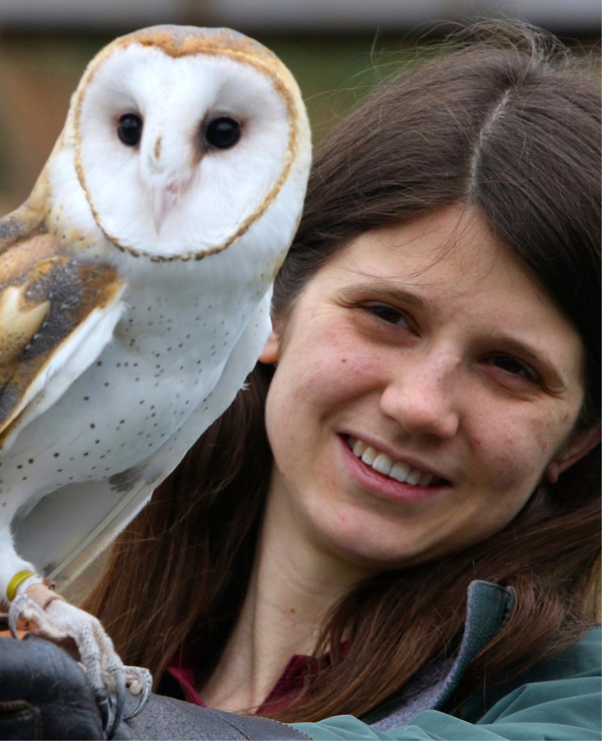 Barn Owl Aurora 2