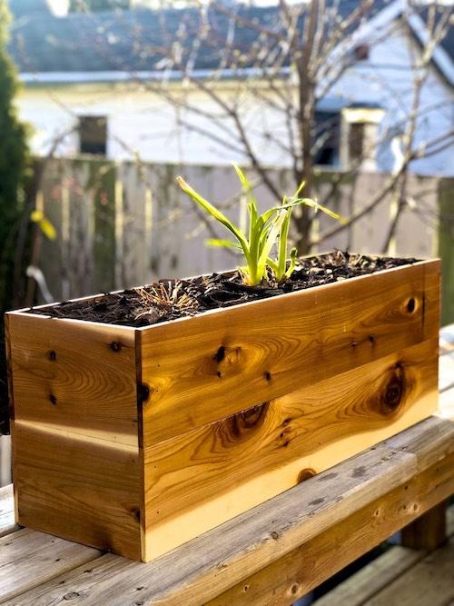 Window and deck Cedar Planter box Winnipeg