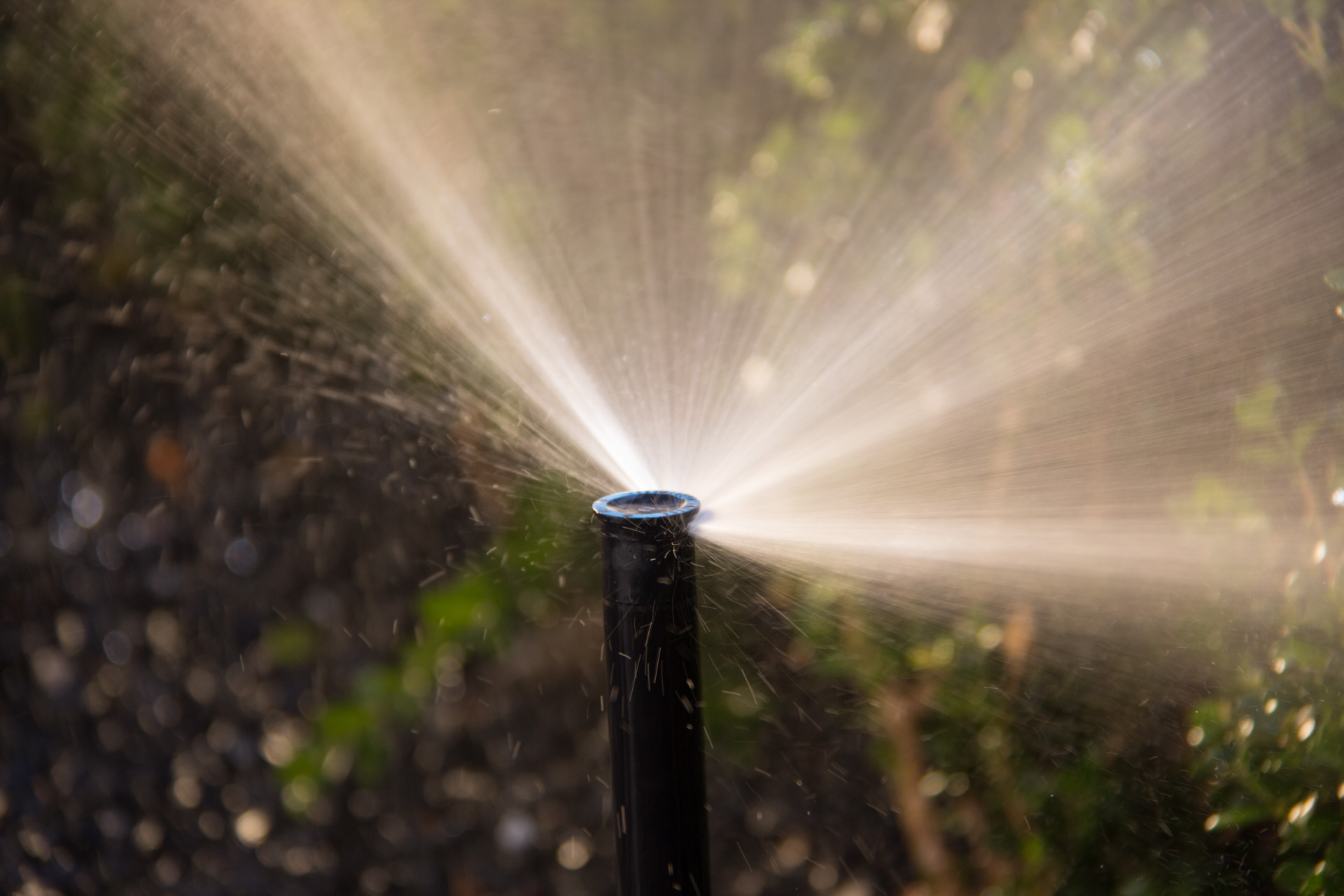 Fort Worth Lawn Sprinkler Photography