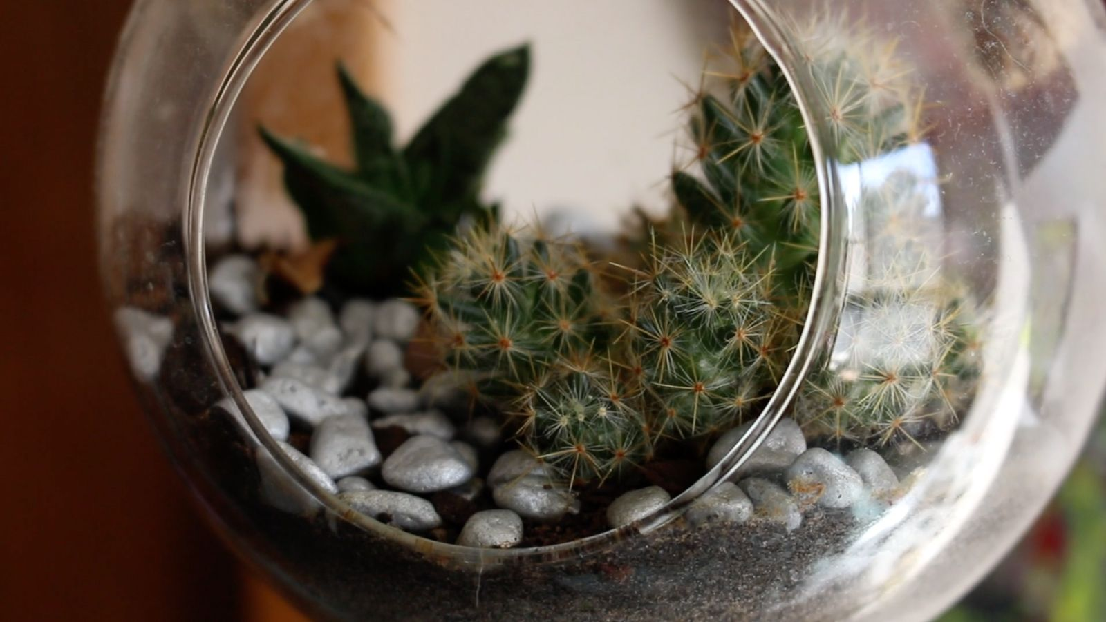 cactus and succulents in bowl
