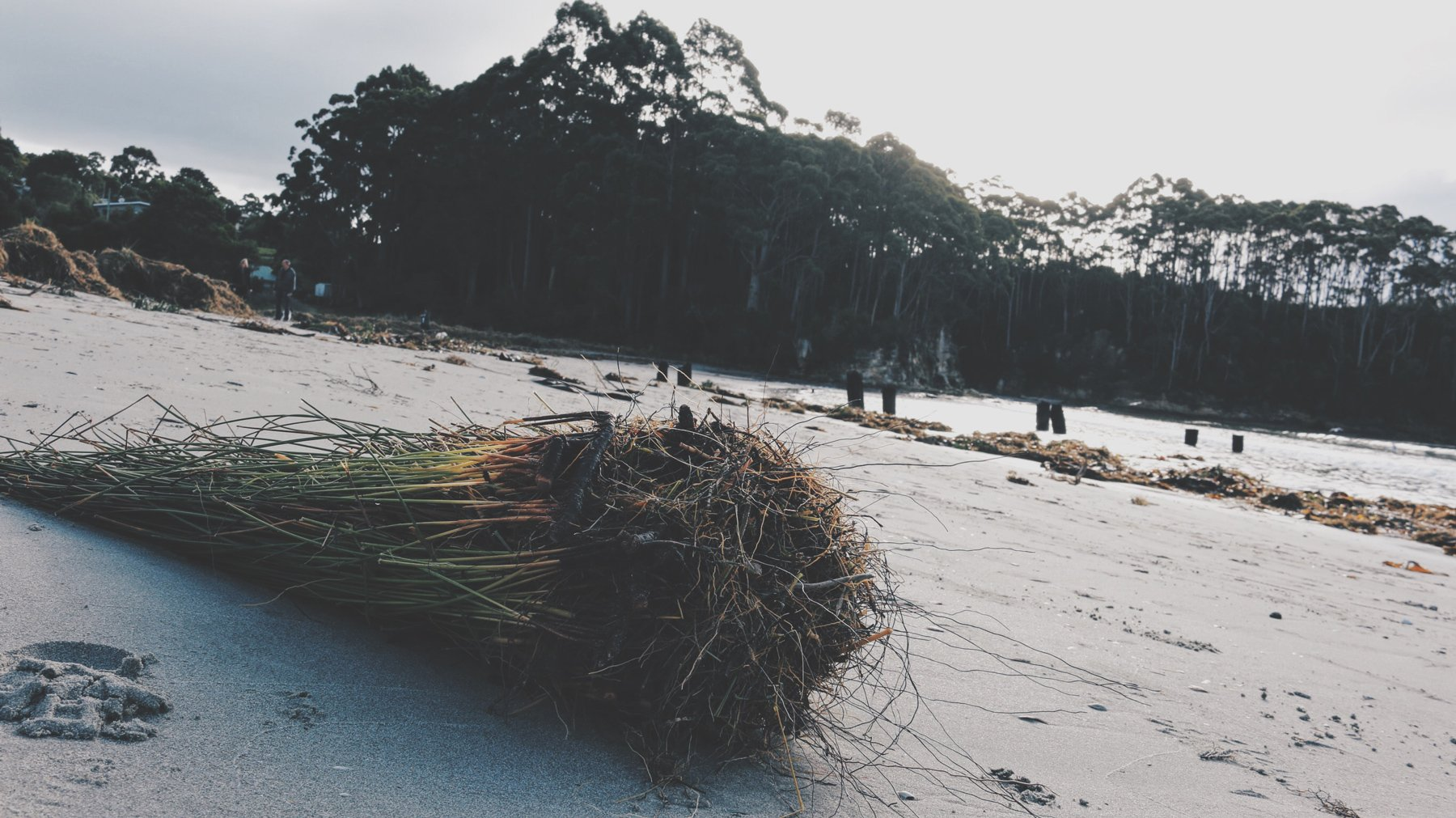 tumble weed washes up on beach