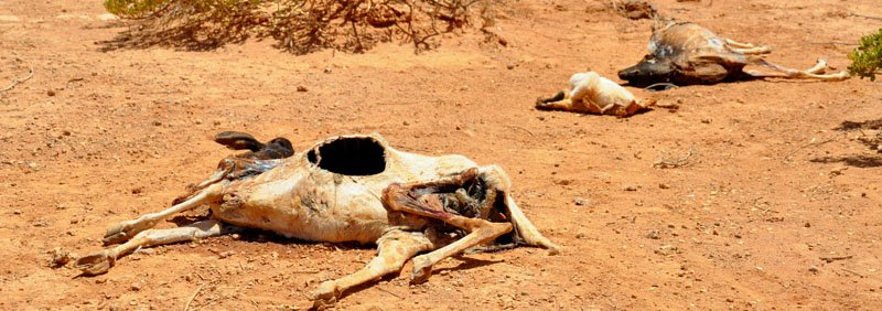 famine in ethiopia horn of africa