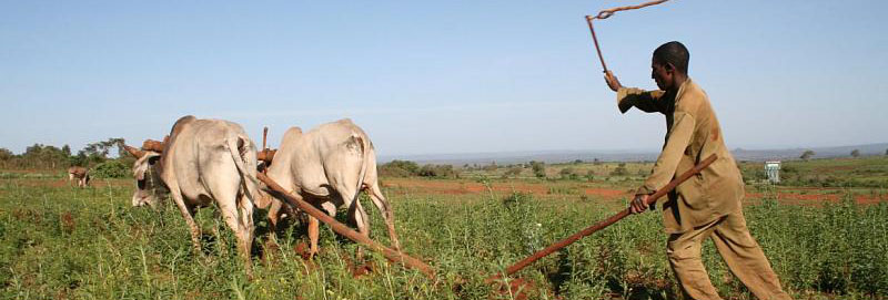 ethiopia farmers agriculture famine