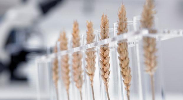 Biotech Plants, Food and Supplements & Aquaculture +
