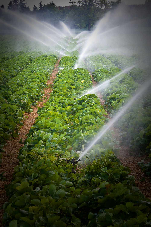 Pro farmu a zahradu