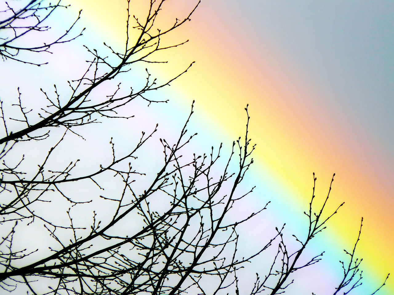 A full spectrum rainbow behind the branches of a tree