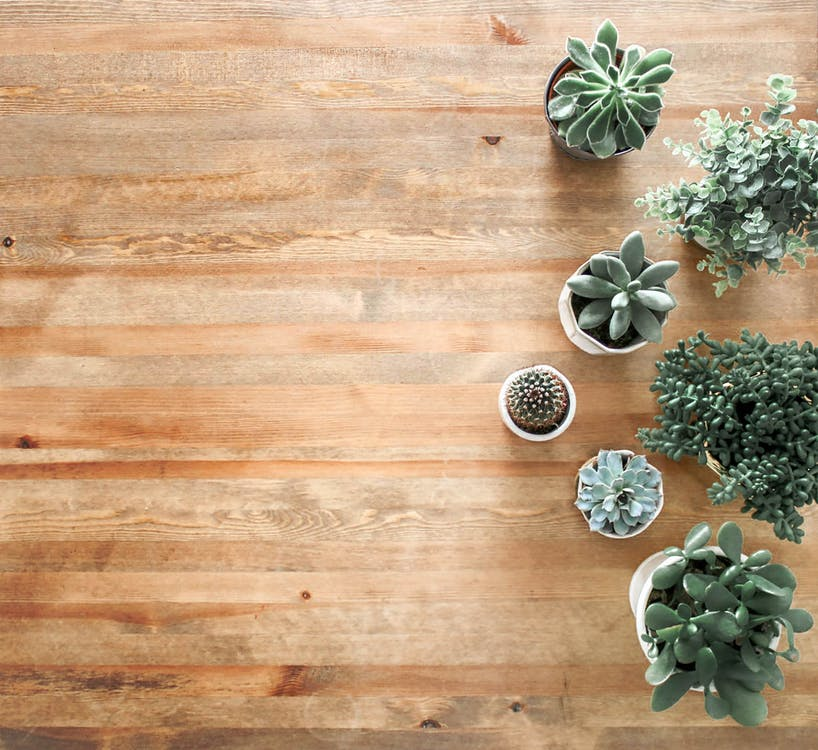 Succulents on a table