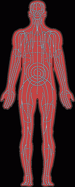 "Image of blue ""vessels"" flowing through a human body showing the flow of chakra in their characters."