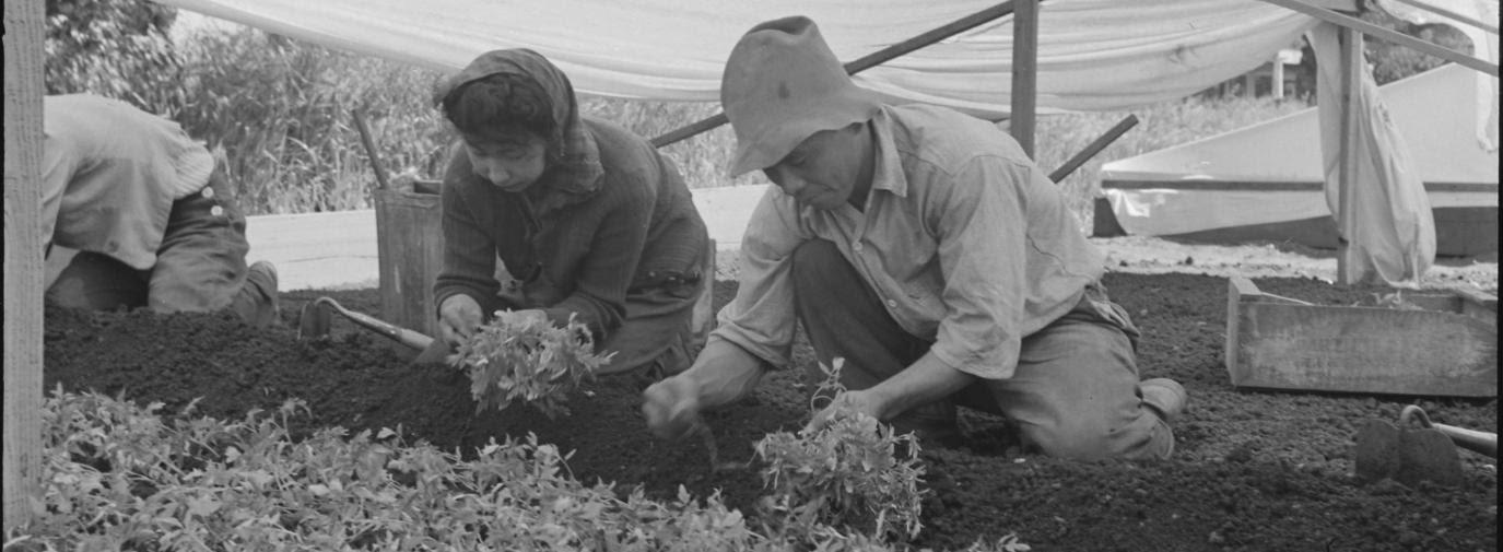 Japanese Americans gardening during World War II.