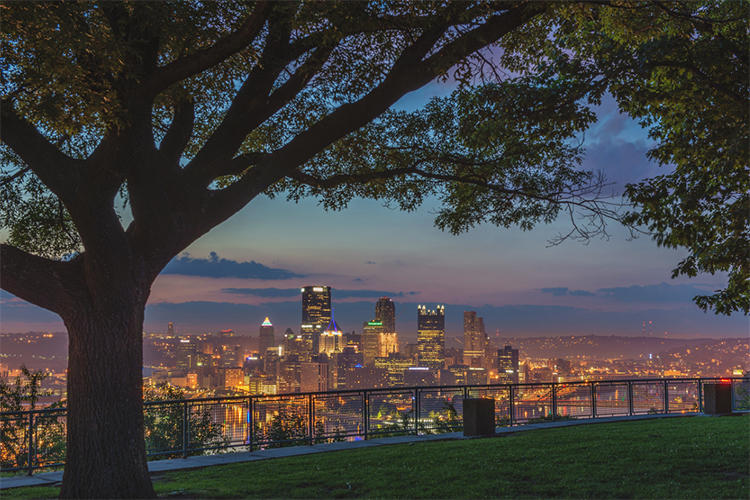 a tree on a hill overlooking the city of pittsburgh