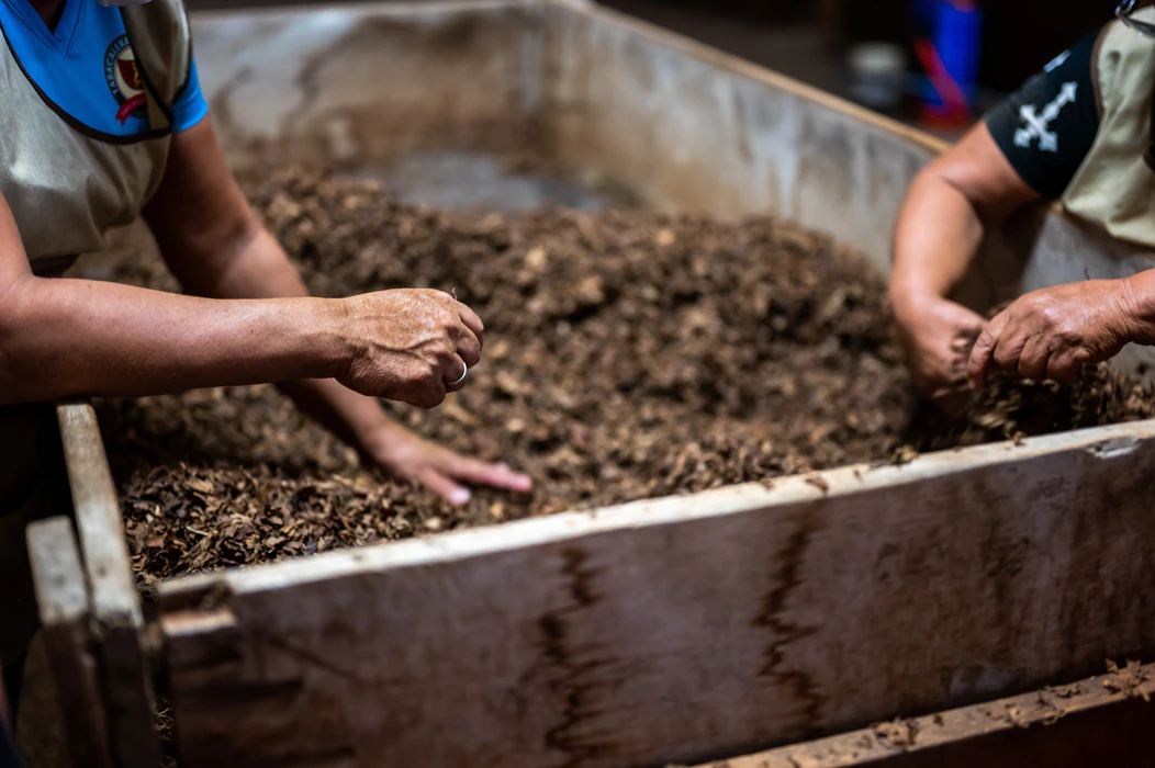 two pairs of hands sifting through soil in a compost pile contained within a tub
