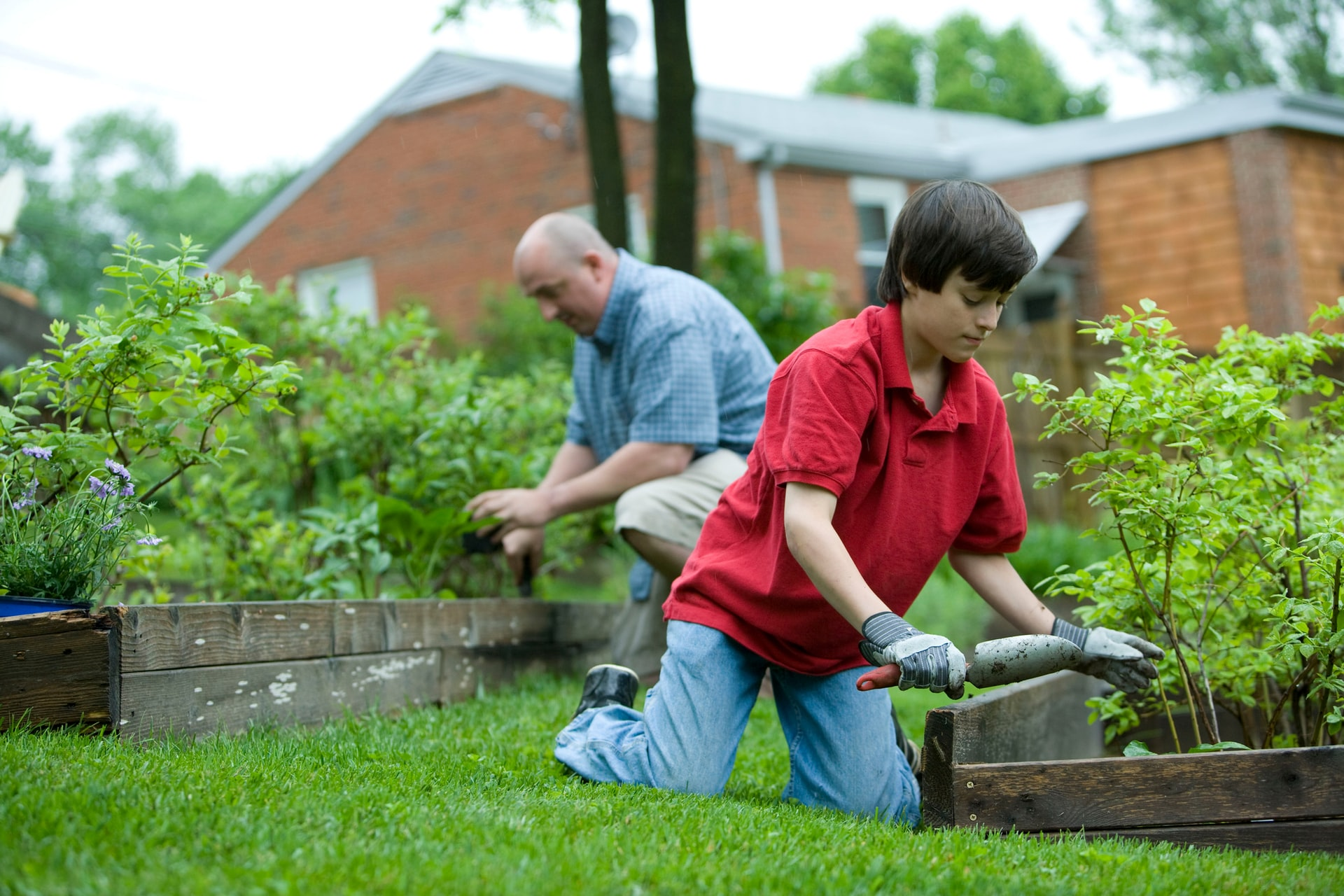 people working in a garden