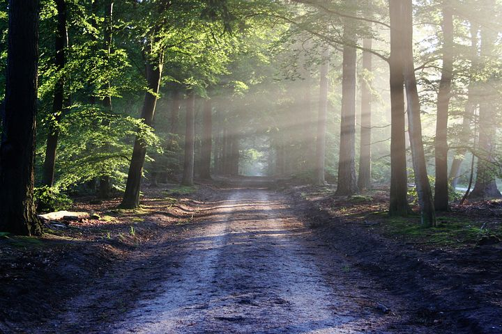 A dirt road that can lead you to your path of success.
