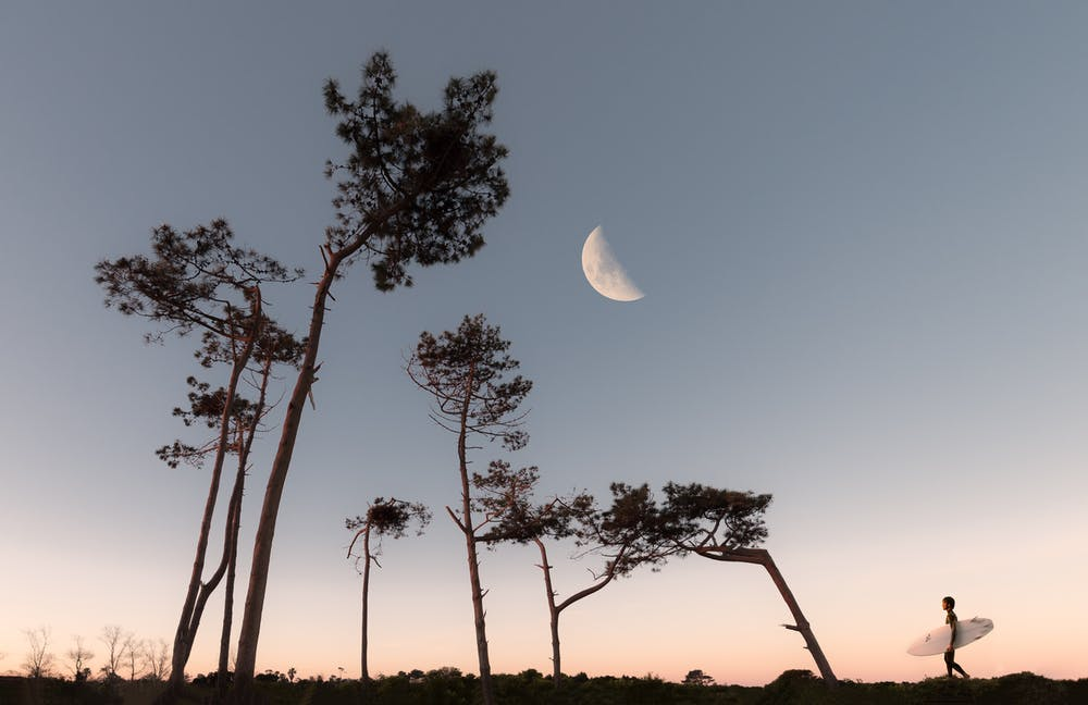 a half moon is visible between trees and a setting sun.