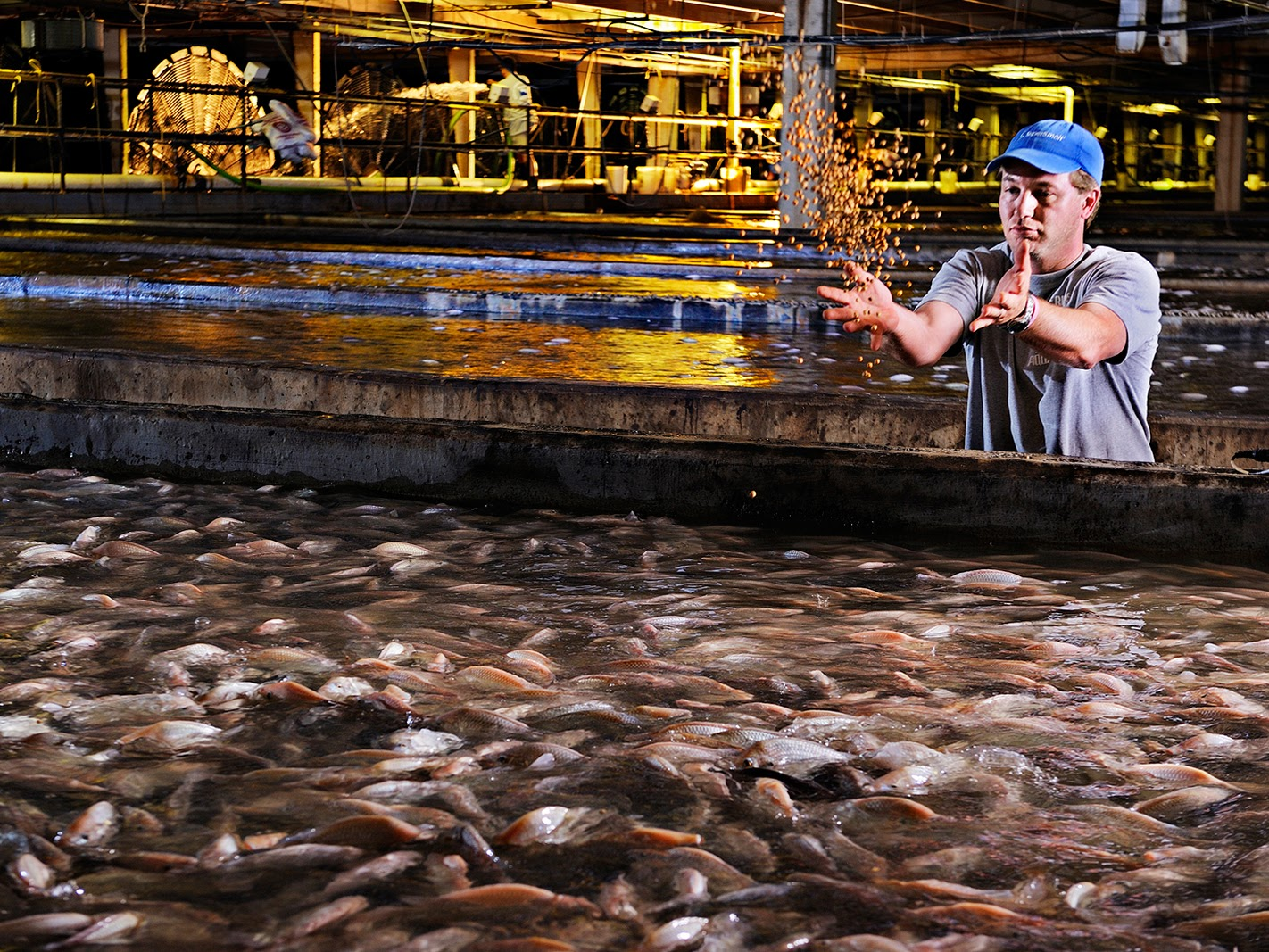 Picture of a tilapia tank in Martinsville, Virginia