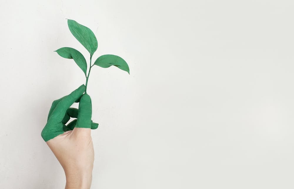 a green dipped hand holds up a stem with leaves against a white background.
