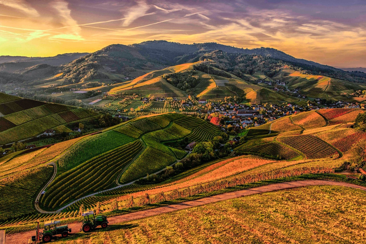 A hilly landscape shared by houses and farmland.
