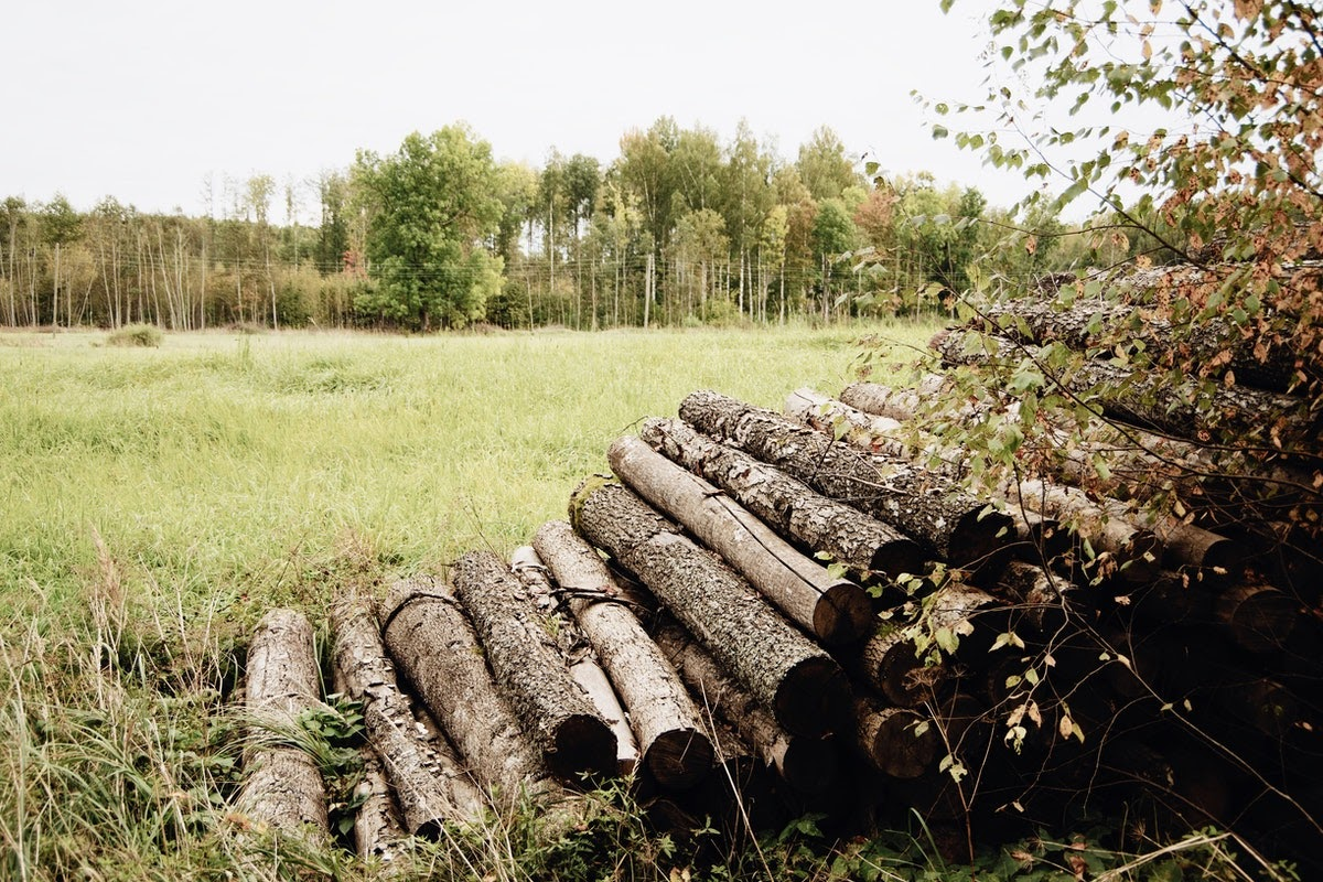 Multiple logs torn down from the trees in the forest.