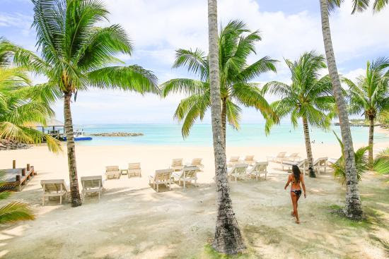 Relax under the shade of the palm trees on the shoreline of the beach. Image courtesy of tripadvisor.com.