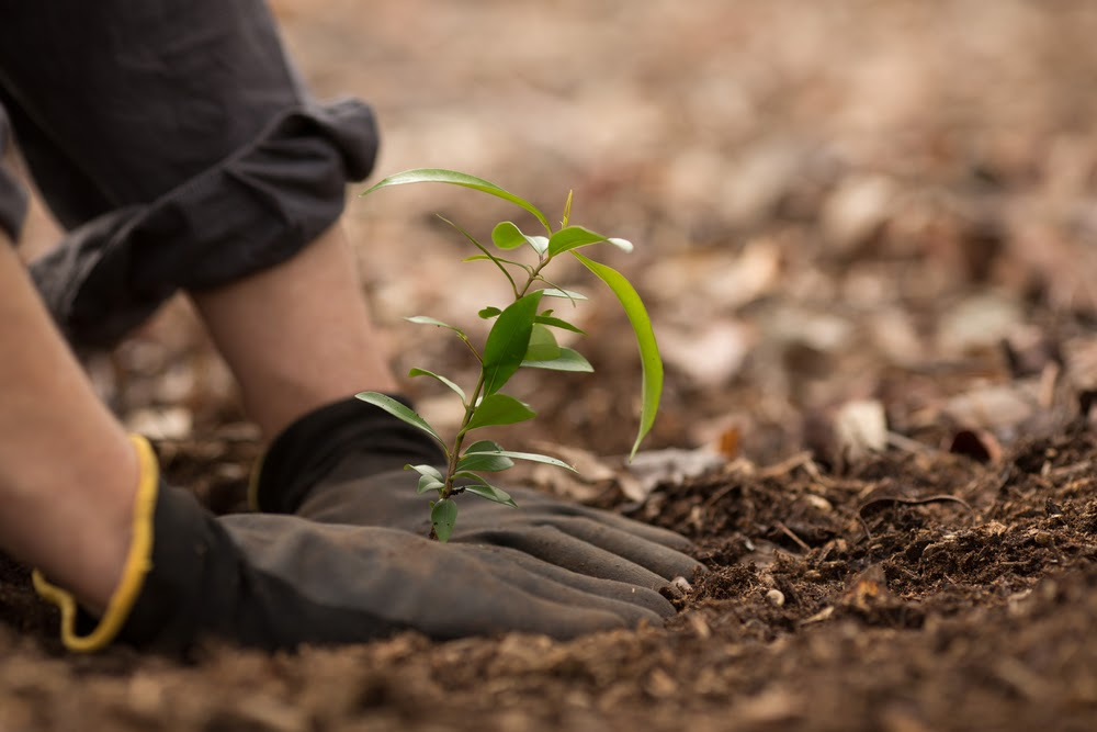 People come together to plant native trees to help enrich ecosystems. Trees benefit us in many ways. While trees grow, they help stop climate change by getting rid of carbon dioxide in the air, storing carbon in the trees and soil, and then releasing oxygen into the atmosphere. Image courtesy of discovermagazine.com.