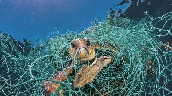 Picture shows a loggerhead turtle suffering entangled in an old plastic fishing net in the ocean. Image courtesy of bbc.com.