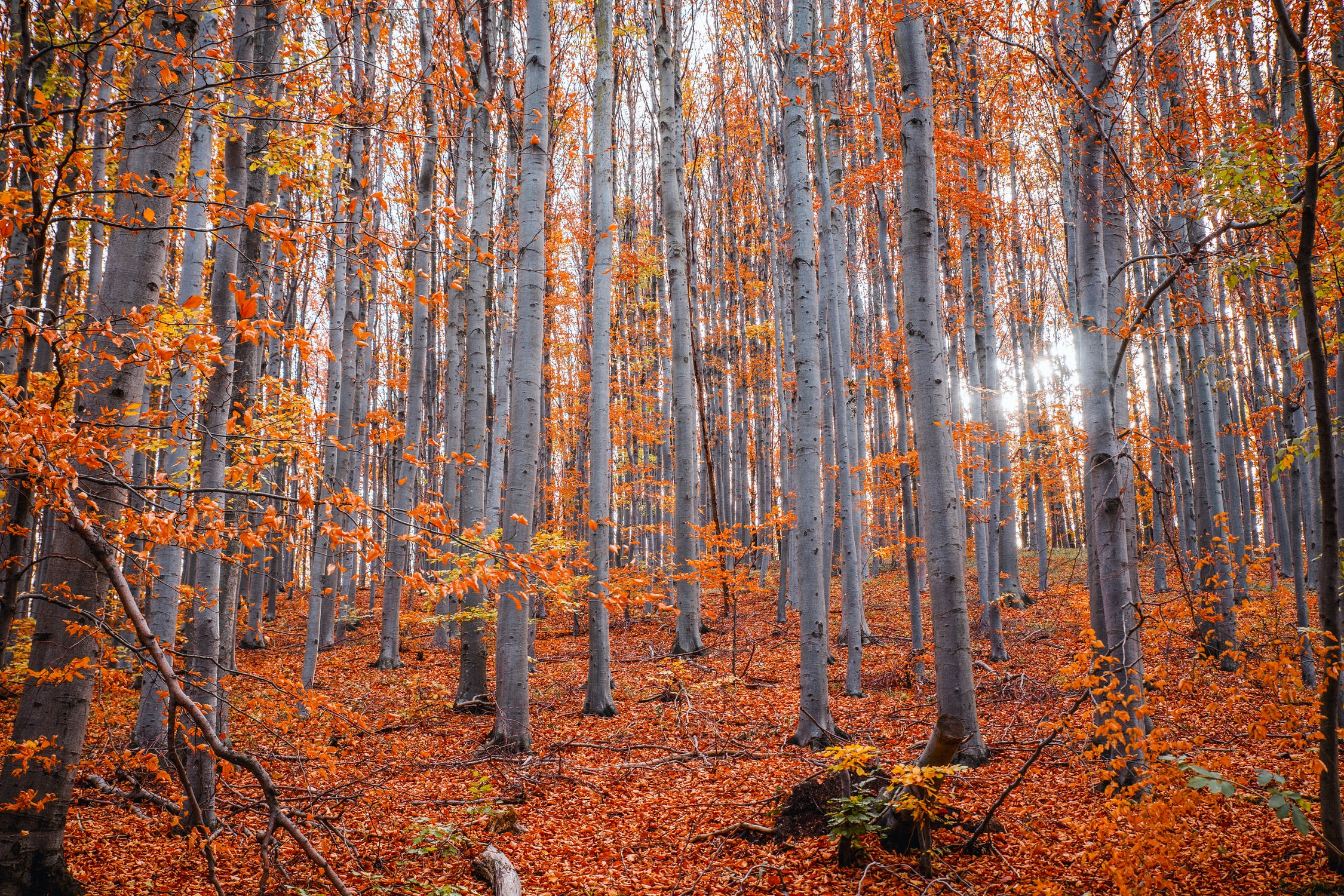 Autumnal forest