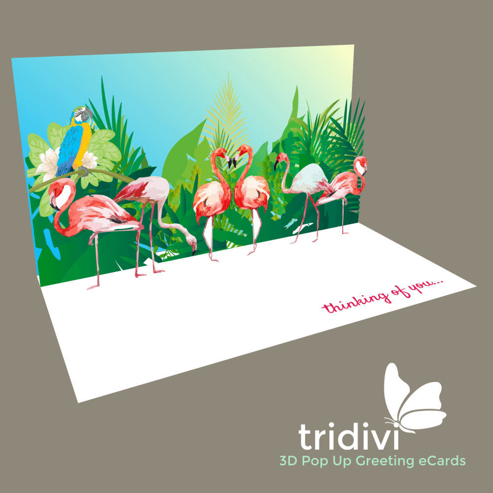 Pelicans 3d Pop Up cards and ecards