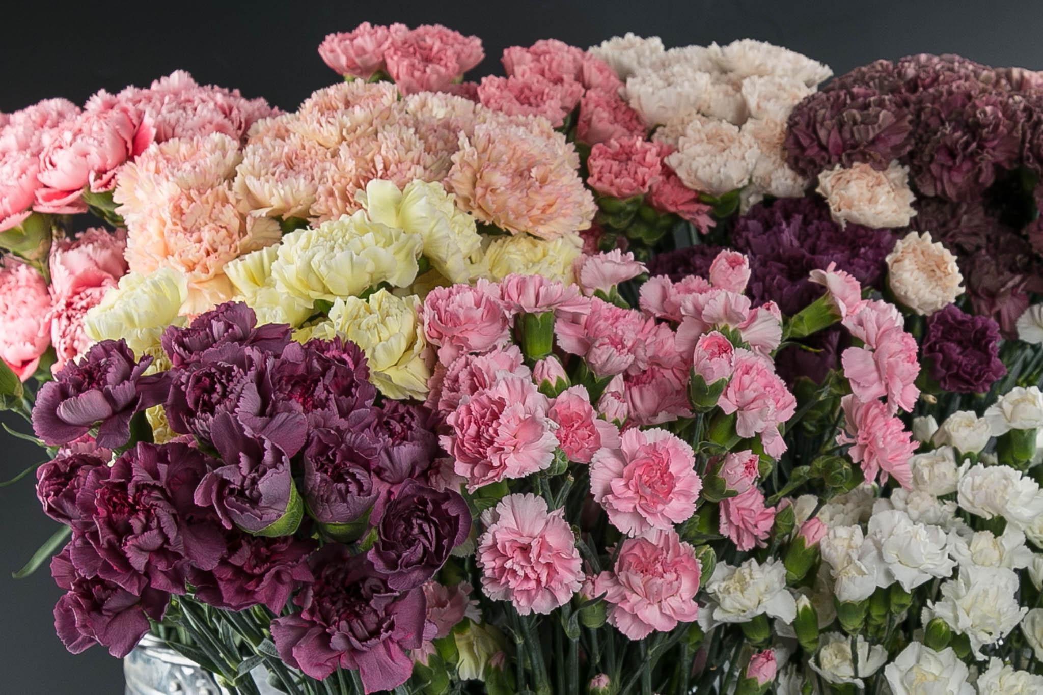 Оформление букетов, оптом компания цветы гвоздики