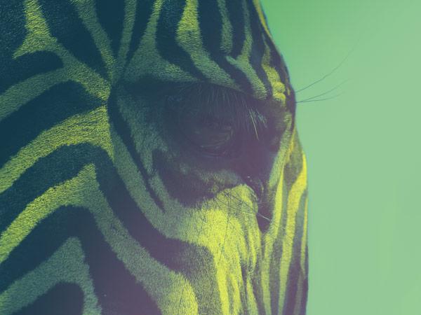 6 Effektmaterialien – Tiger, Leopard, Pink Ozelot, Kuhfell, Zebra und Giraffe