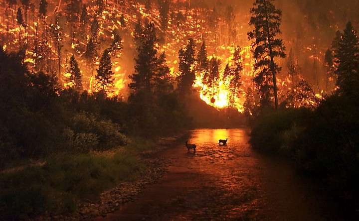 A wildfire in the Bitterroot National Forest in Montana. Last year, wildfires burned Fort McMurray in Canada, a tar sands oil support city; and Gatlinburg, Tennessee, a tourist town. As the world warms, wildfires are likely to greatly worsen, especially in the U.S., say scientists. Photo by John McColgan, Edited by Fir0002 courtesy of the USDA.