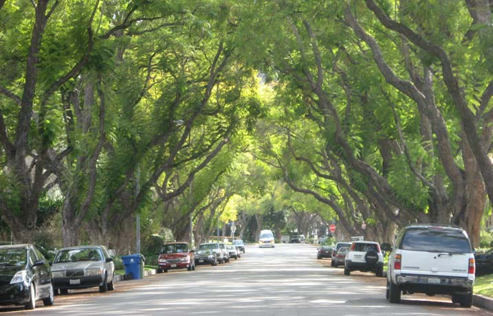There is an estimate that there are over 10 million trees growing in the City of Los Angeles. Courtesy of Los Angeles, Urban Forestry Division