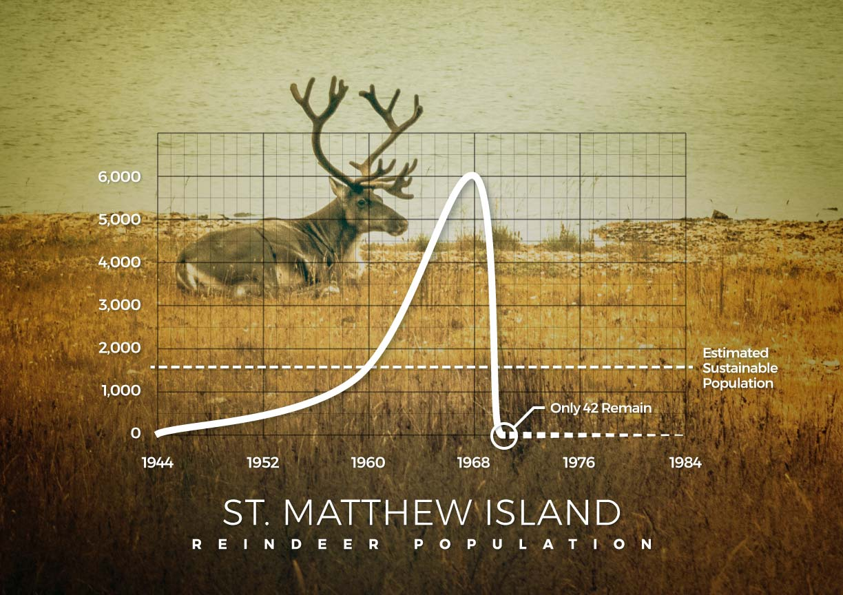 A graph showing the St. Matthew Island reindeer population collapse