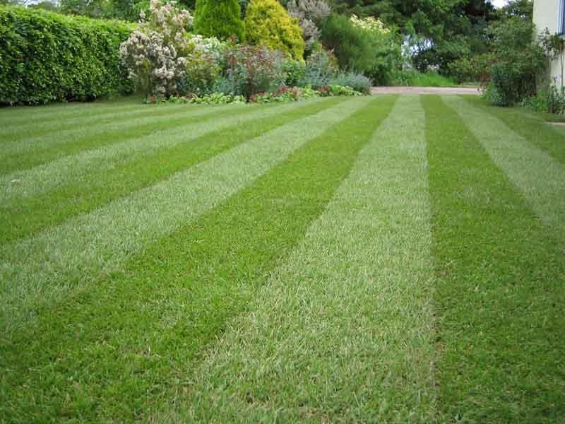 Gardeners Enfield