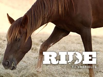RESQUIP LARRCo Sponsored Horse Mannequin
