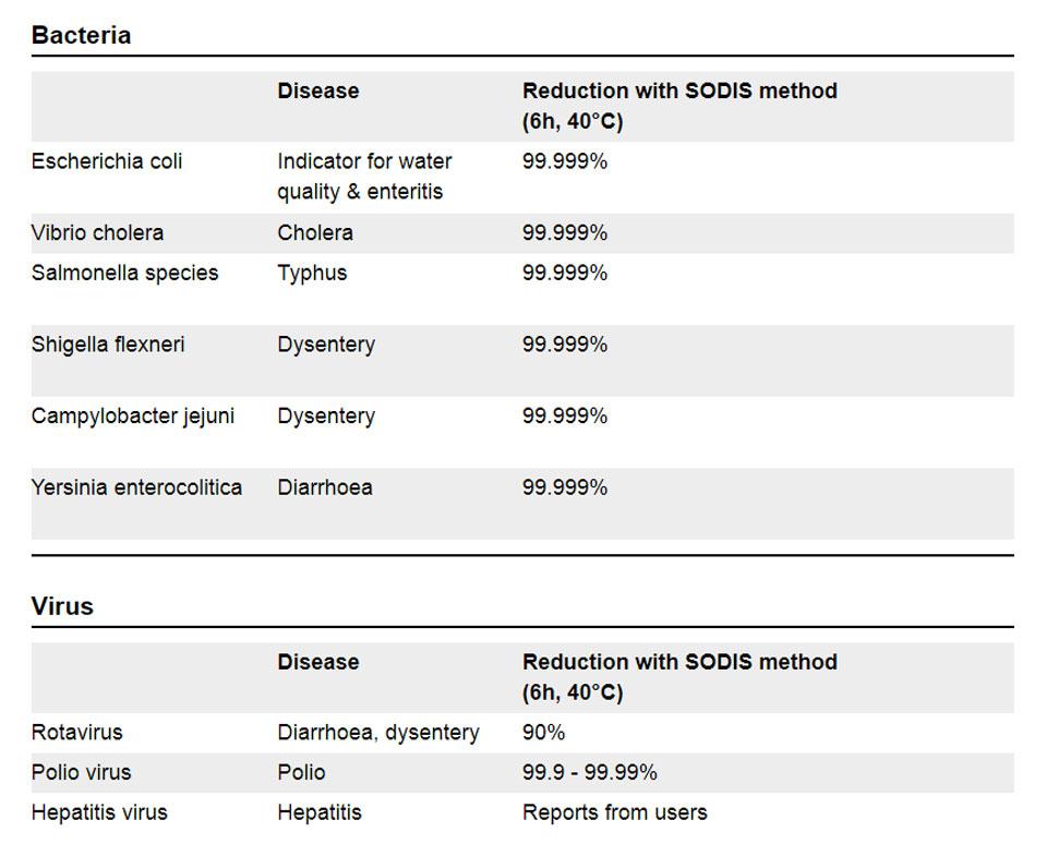 Bacterias y virus.