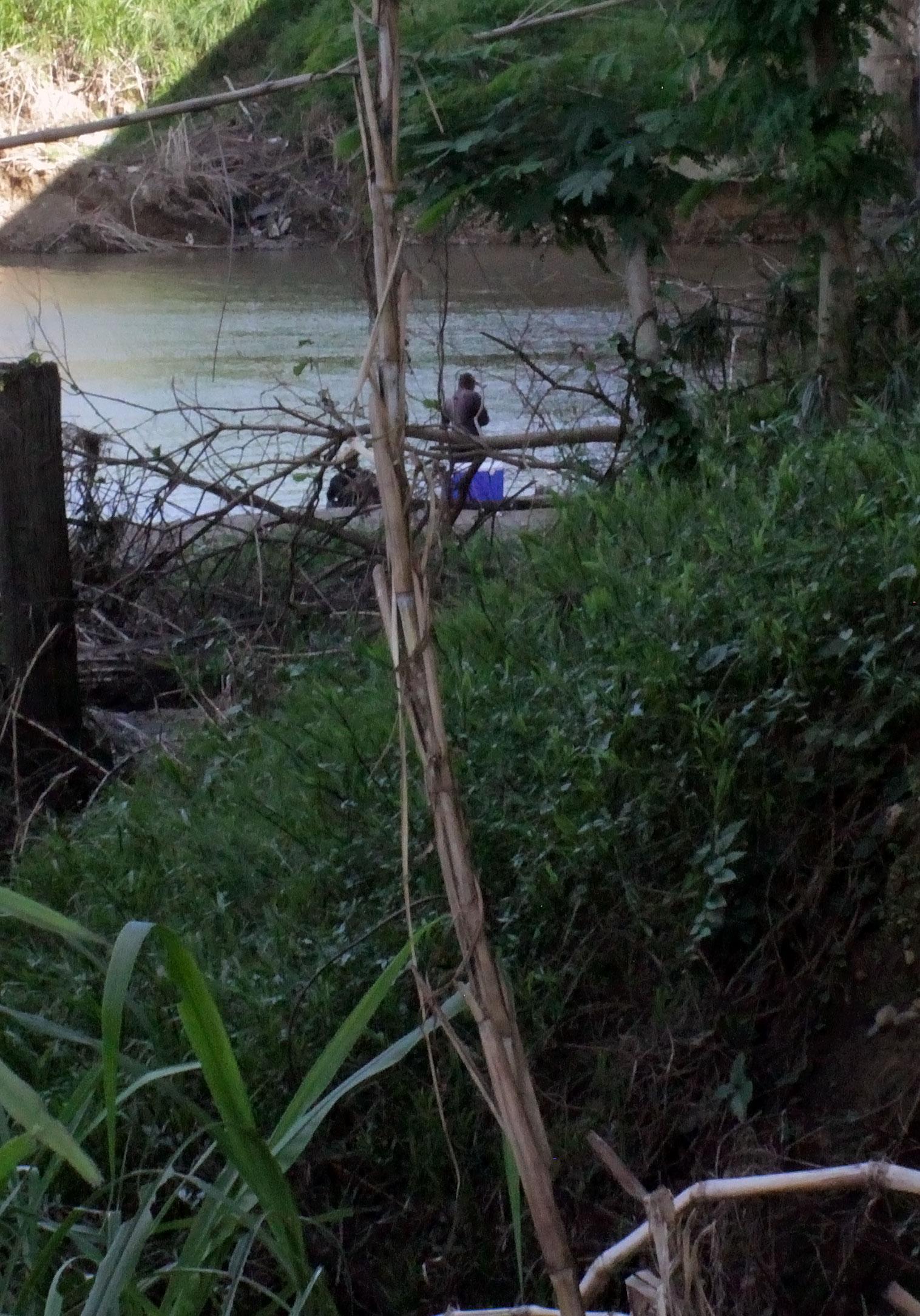 Personas pescando en el Río Grande de Loíza, bajo el Puente Julia De Burgos en Carolina, Puerto Rico.