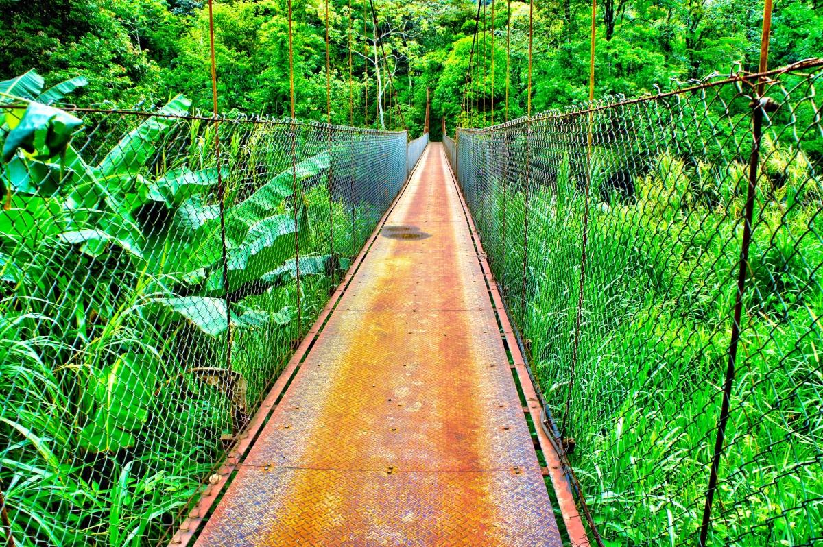 adventure-life-lessons-bridge-jungle