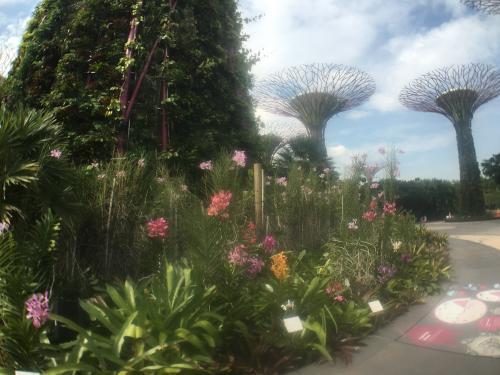 singapore-hanging-gardens