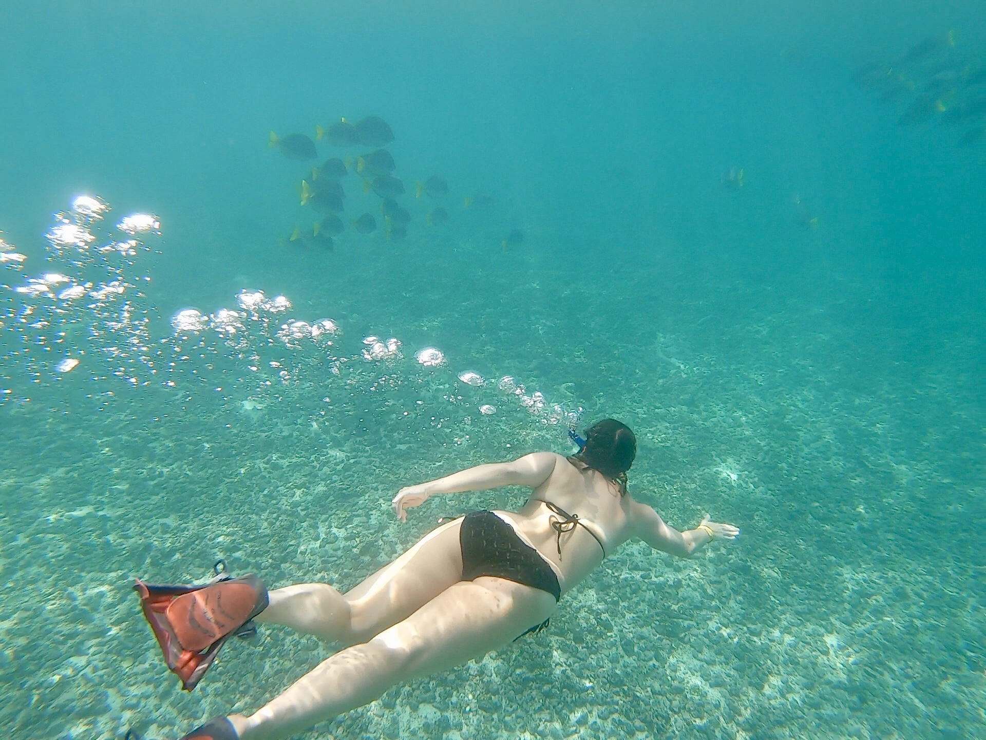 snorkeling-in-the-galapagos-islands